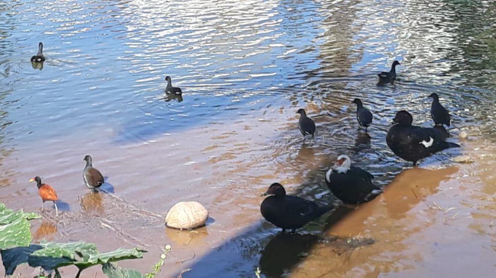 A beleza das aves na Lagoa do Meio, em Linhares.
