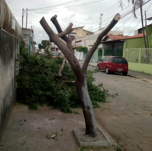 Leitor envia fotos: Poda de árvore gera reclamação no BNH