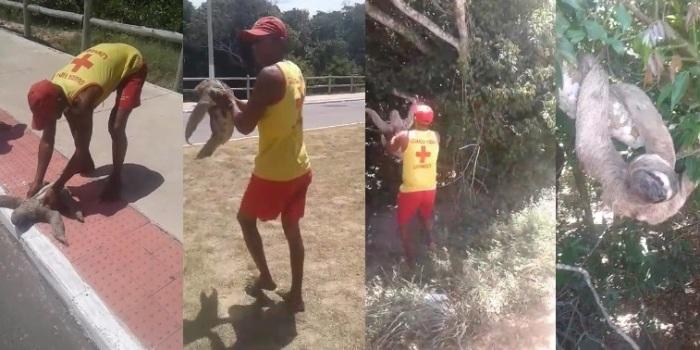 Vídeo: Guarda-vidas ajudam bicho-preguiça atravessar avenida no Pontal do Ipiranga