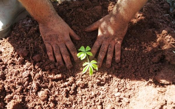 Técnicos serão capacitados para atuarem em projetos de restauração florestal no ES