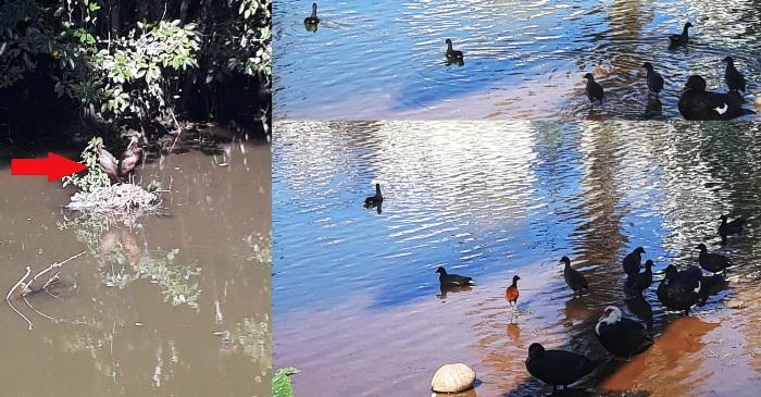 Registro do dia: Aves chamam a atenção na Lagoa do Meio