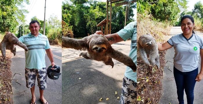 Casal ajuda bicho preguiça que tentava atravessar rodovia em Linhares