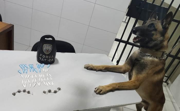 Cão Nill fareja droga até dentro de caixa de esgoto, em Linhares