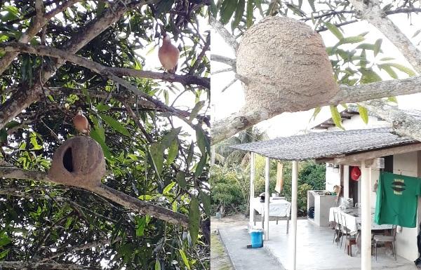 João de Barro: Aves encantam família em sítio de Linhares