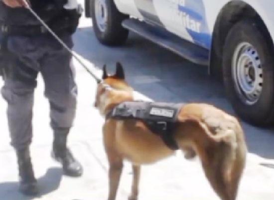 Pai e filho detidos após Cão Nill encontrar crack no Santa Cruz