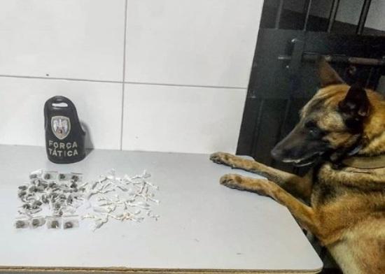 CDI: Cão Nill encontra droga escondida atrás de escola, no Araçá